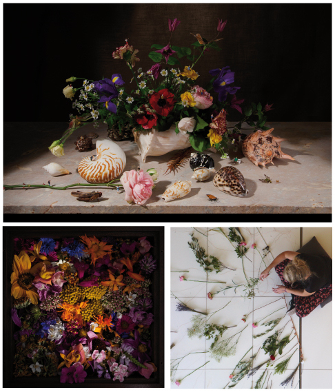 Collage-Luise-Law