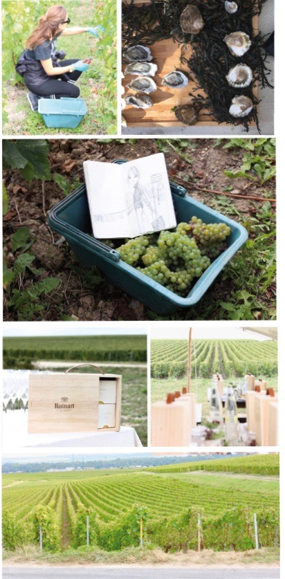 Jasmin Khezri from IRMASWORLD harvesting grapes at the Ruinart Vinery outside of Reims, oysters and champagne are a perfect mix, there is always time for sketching, lunch is ready, with a perfect lunchbox by French/Vietnamese Chef Céline Pham who created the lunchbox which came along with chilled rosé champagne