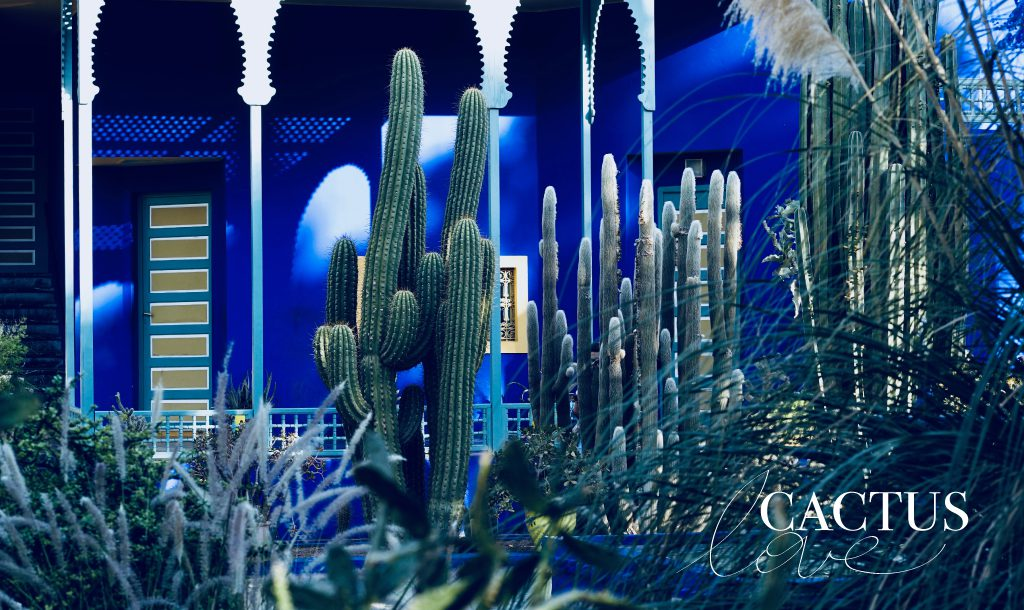 CACTUS is the flower of the moment